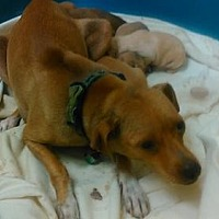 Adopt A Pet :: Hope - Colton, CA