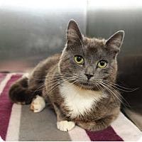 Adopt A Pet :: Violet - Farmingdale, NY