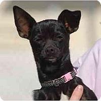 Adopt A Pet :: RiRi - Ft. Myers, FL