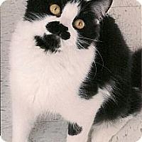 Adopt A Pet :: Sadie - Medway, MA