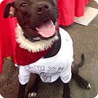 Adopt A Pet :: Marcel Courtesy post - Scottsdale, AZ