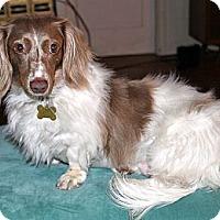 Adopt A Pet :: Emily - San Jose, CA