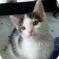 Adopt A Pet :: Gypsy - Catasauqua, PA