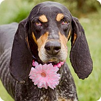 Adopt A Pet :: Sklyer - ADOPTED! - Zanesville, OH