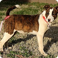 Adopt A Pet :: Harper - Foster, RI