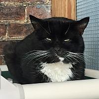 Adopt A Pet :: Boris - Greensburg, PA