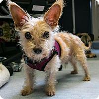 Adopt A Pet :: Hampton - San Francisco, CA