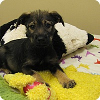 Adopt A Pet :: Silby - Groton, MA