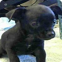 Adopt A Pet :: *GAMMA - Sacramento, CA
