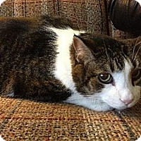 Adopt A Pet :: Barny - $25 Adoption Fee - Pekin, IL