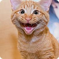 Adopt A Pet :: Lonan - Irvine, CA