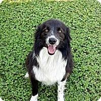 Adopt A Pet :: Frankie - Harrisburgh, PA