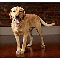 Adopt A Pet :: Champ - Owensboro, KY