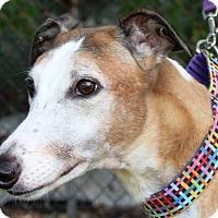 Adopt A Pet :: Current - Orange County, CA