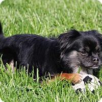 Adopt A Pet :: Monkey - Virginia Beach, VA