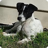 Adopt A Pet :: Hank In Bryan ADOPTION PENDING - Houston, TX