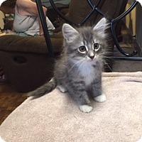 Adopt A Pet :: star - Kelso/Longview, WA