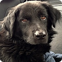 Adopt A Pet :: Gulliver - New Canaan, CT