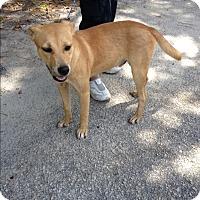 Adopt A Pet :: Dexter (fostered in NC) - Cranston, RI