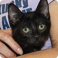 Adopt A Pet :: Wendy - Louisville, KY