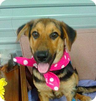 Shepherd (Unknown Type) Mix Dog for adoption in Princeton, Kentucky - Maisy