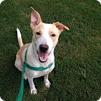 Adopt A Pet :: Willow - Rockmart, GA