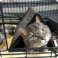 Adopt A Pet :: Brent - Orleans, VT