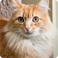 Adopt A Pet :: Peggy Sue - Seattle c/o Kingston 98346/ Washington State, WA