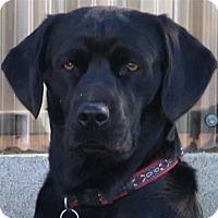 Adopt A Pet :: Ziggy - San Diego, CA