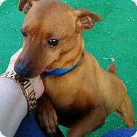 Adopt A Pet :: Rowdy - Summerville, SC