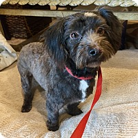 Adopt A Pet :: Mona - Santa Ana, CA