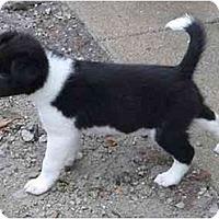 Adopt A Pet :: CobbF2 - Tiffin, OH