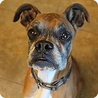 Adopt A Pet :: Rocky # 846 - Nixa, MO