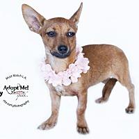 Adopt A Pet :: Sukey - Castaic, CA