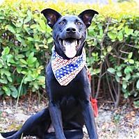 Adopt A Pet :: Walter - Castro Valley, CA