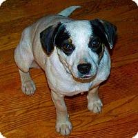 Adopt A Pet :: Faith - Staunton, VA