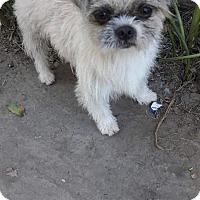 Adopt A Pet :: Mel - LAKEWOOD, CA