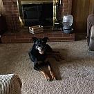 Adopt A Pet :: Solo