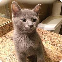 Adopt A Pet :: Rex - Mustang, OK