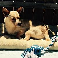 Adopt A Pet :: Logan - Del Rio, TX