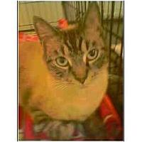 Adopt A Pet :: Symon - Owasso, OK