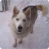 Adopt A Pet :: Bella - Belleville, MI