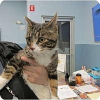 Adopt A Pet :: Charles - Sterling Hgts, MI