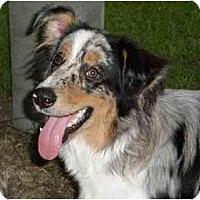 Adopt A Pet :: Tim - Orlando, FL
