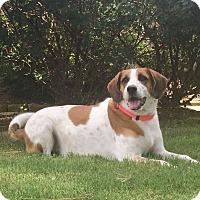 Adopt A Pet :: Wilson - Hagerstown, MD
