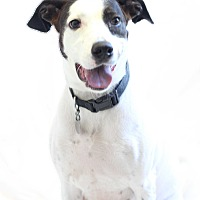 Adopt A Pet :: Ella - Bradenton, FL
