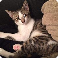 Adopt A Pet :: Varner - Fairborn, OH