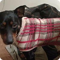 Adopt A Pet :: peanut - North Brunswick, NJ