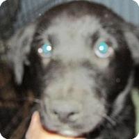 Adopt A Pet :: Yeti - Rocky Mount, NC