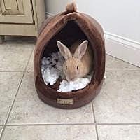 Adopt A Pet :: Binks - Manchester, CT